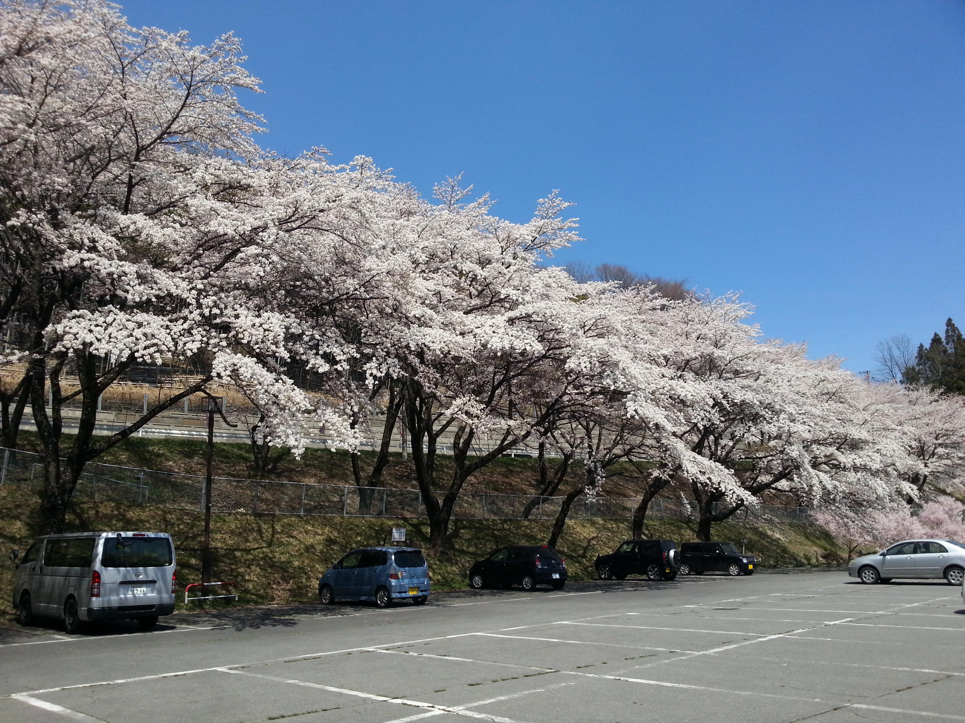 与田切公園1 2014.4.14.jpg