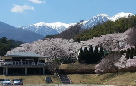 与田切公園4 2014.4.14.jpg