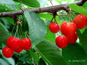 【初夏限定】旬の赤い宝石
