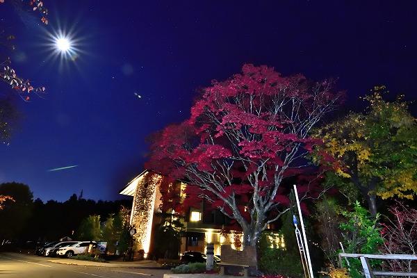 メイプル紅葉と月明かりと星4.jpg