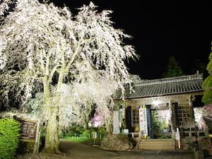 【夜桜無料送迎付!】光前寺の夜桜・幻想ライトアップ鑑賞プラン画像その1