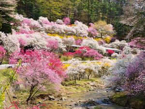 【ガーデン側確約】部屋から眺める春の芽吹き「春景色」宿泊プラン画像その1
