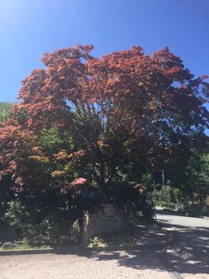 紅葉の季節になってまいりました。画像その1