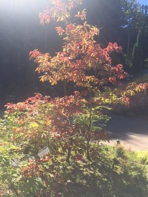 紅葉の季節になってまいりました。画像その2