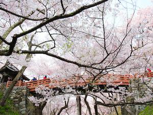【お得な早割】春の高原を満喫プラン(1泊2食付)画像その1