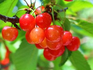 【6月限定】旬の赤い宝石