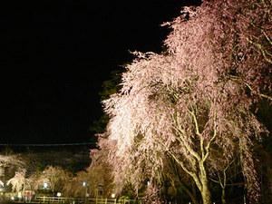 ゚+。★☆南信州にお花見に行こう☆★。+゚画像その1